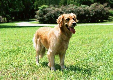 Препараты для лечения домашних животных - ронколейкин, гентамицин, фоспренил,